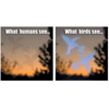 Additional Images for BBG WINDOW DECAL 4/PKG